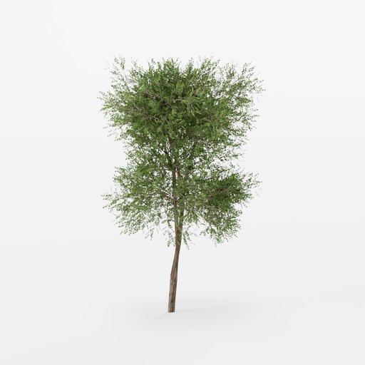 Thumbnail: Common Lilac Tree 01