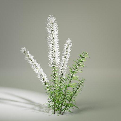Thumbnail: Liatris Flower