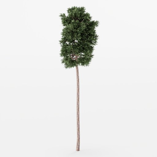 Thumbnail: Forest Pine Tree