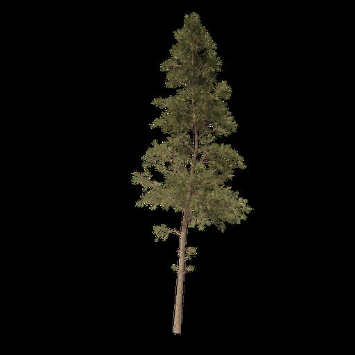 Thumbnail: Pine tree v2