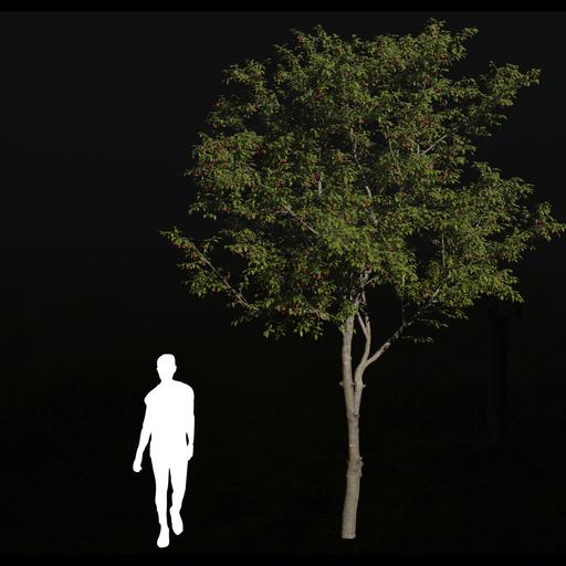 Thumbnail: Cherry tree