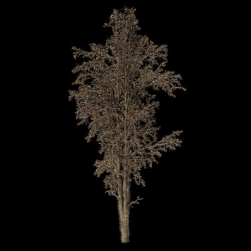 Thumbnail: Dead Tree v1