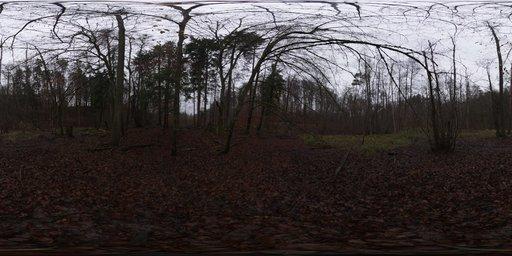 Muddy Autumn Forest