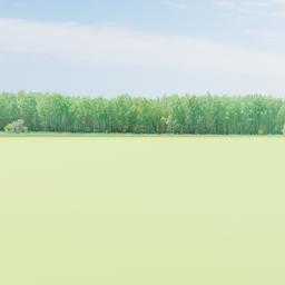 Thumbnail: Greenleaf Treeline 011 Backdrop