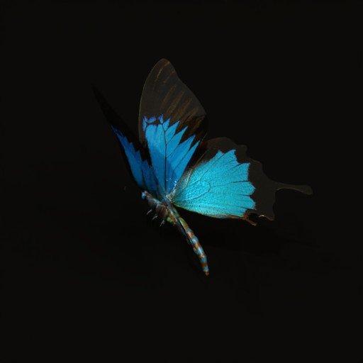 Thumbnail: Cobalt blue buterfly