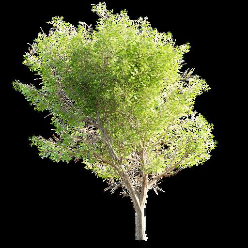 Thumbnail: Tree LOD 0