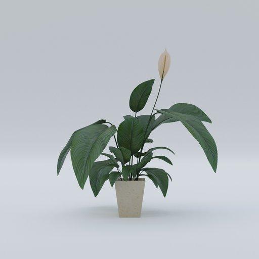 Thumbnail: Plant 7