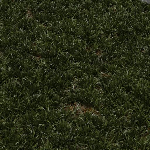 grass lawn cut 1x1 m