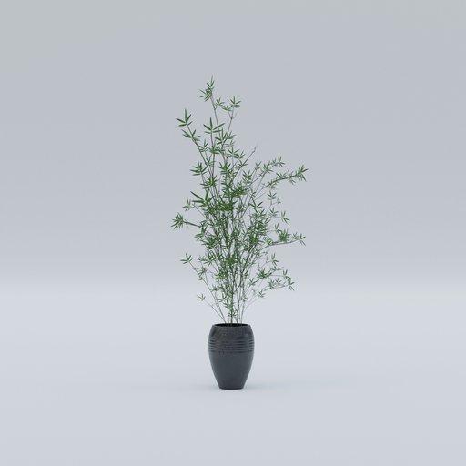 Thumbnail: Plant 11