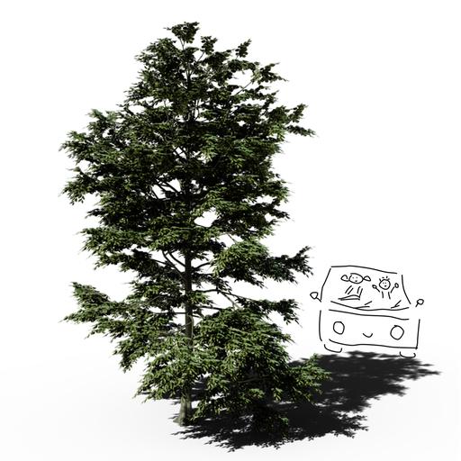 Thumbnail: Patagonian Oak Tree