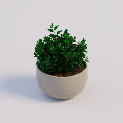 Thumbnail: Kitchen Herbs