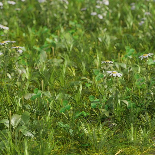 Grass meadow mix - Camomille, plantago and clover  Large area