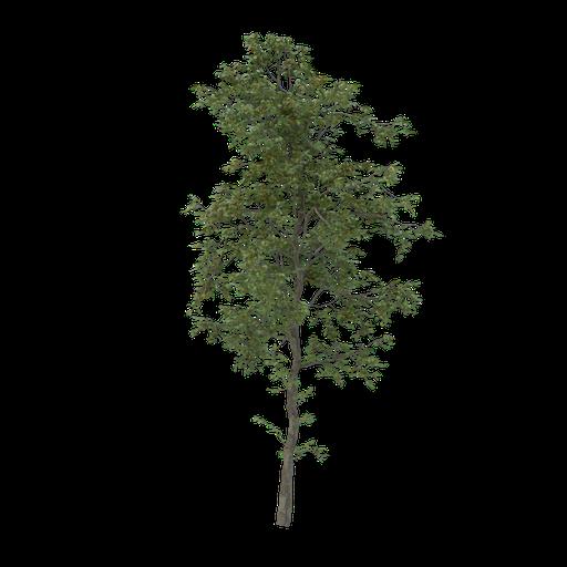 Thumbnail: Thin tree V2