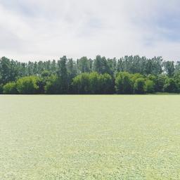 Thumbnail: Greenleaf Treeline Backdrop 003