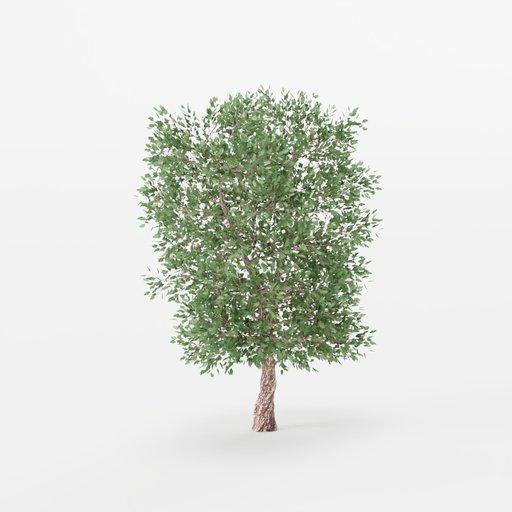 Thumbnail: Maple Tree 03