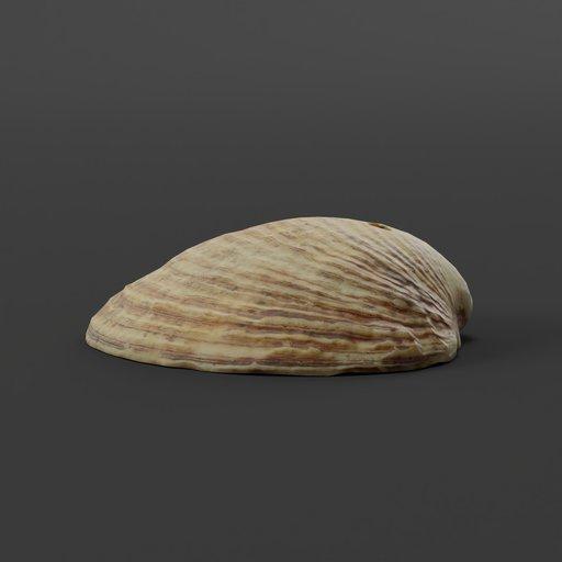 Thumbnail: Shell