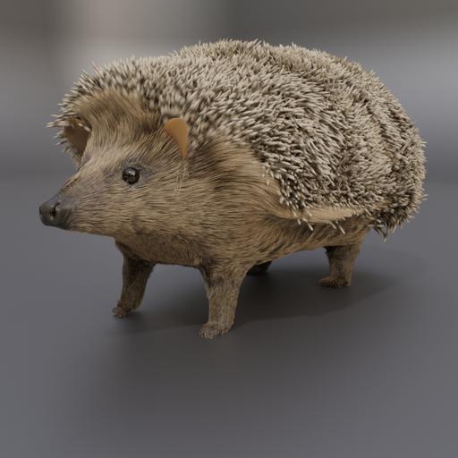 Thumbnail: Hedgehog