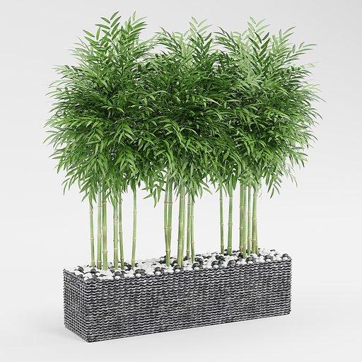 Thumbnail: Bamboo Pot