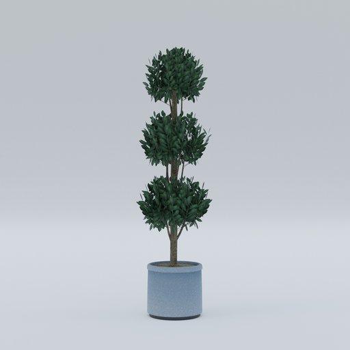 Thumbnail: Bush plant