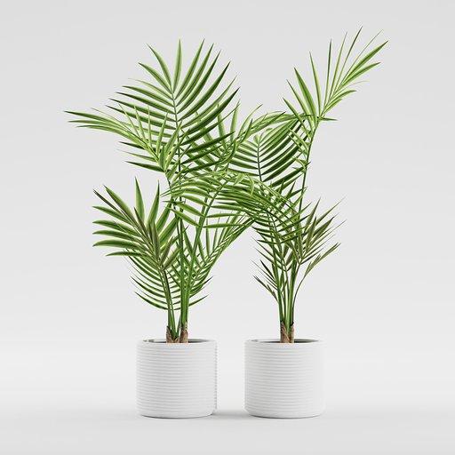 Thumbnail: Plants - Palm