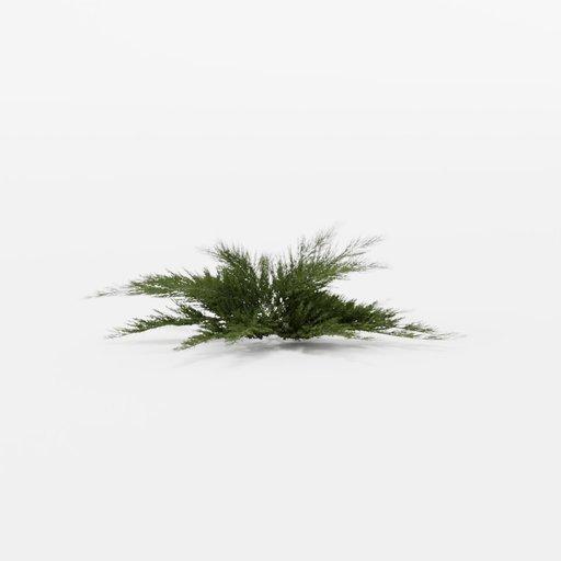 Thumbnail: Juniperus sabina