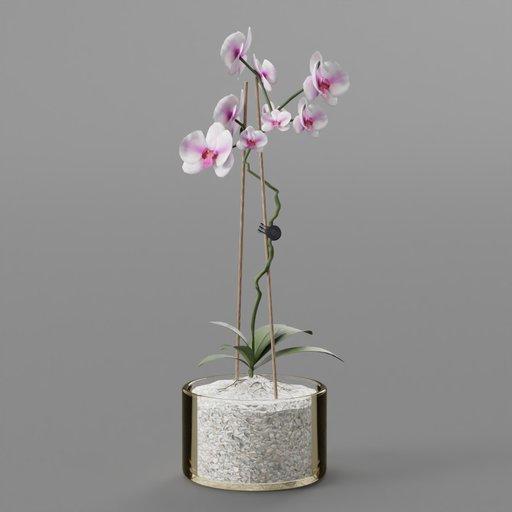 Thumbnail: Moth White Purple Orchid