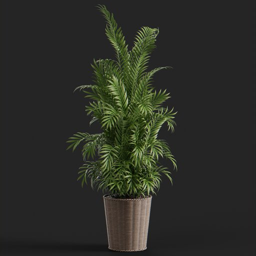 Thumbnail: Glasha plant