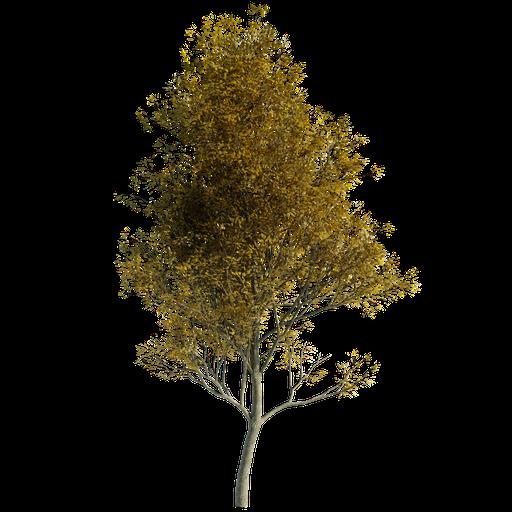 Thumbnail: Tree  Random 00 Autumn