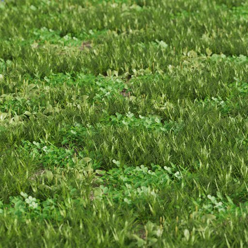 Grass mix - plantago and clover  Large area