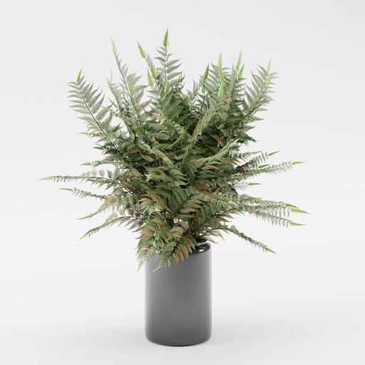 Thumbnail: Interior Plants