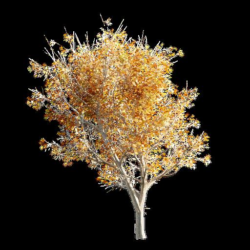 Thumbnail: Tree LOD 1 Autumn