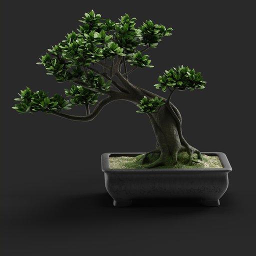 Thumbnail: Bonsai Tree