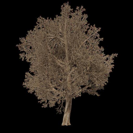 Thumbnail: Dead Oak
