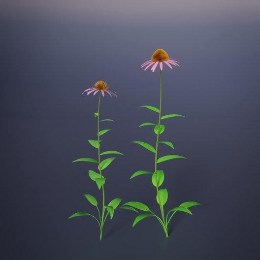 Thumbnail: Echinacea purpurea