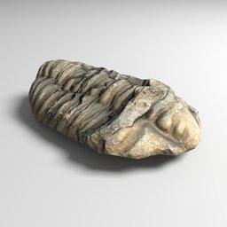 Thumbnail: trilobite