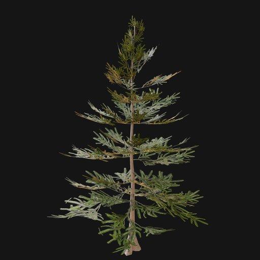 Thumbnail: Norway Spruce Tree SAP 01