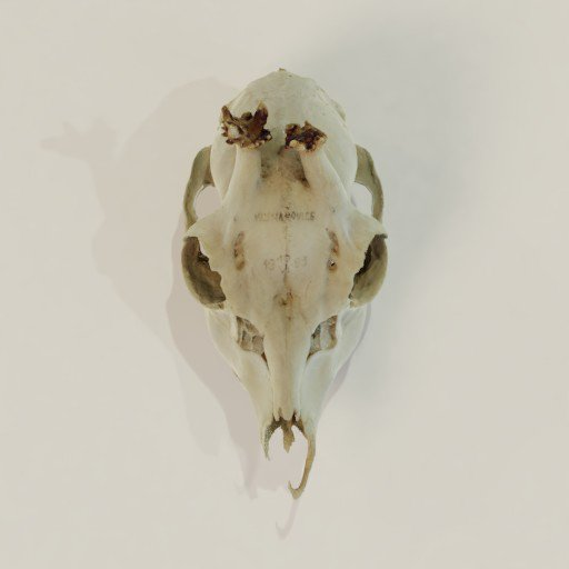 Thumbnail: Deer skull