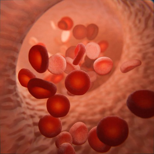 Vein with Blood Cells - human biology