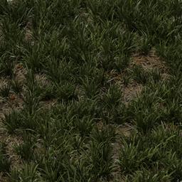 Thumbnail: grass 1x1 m basic uncut