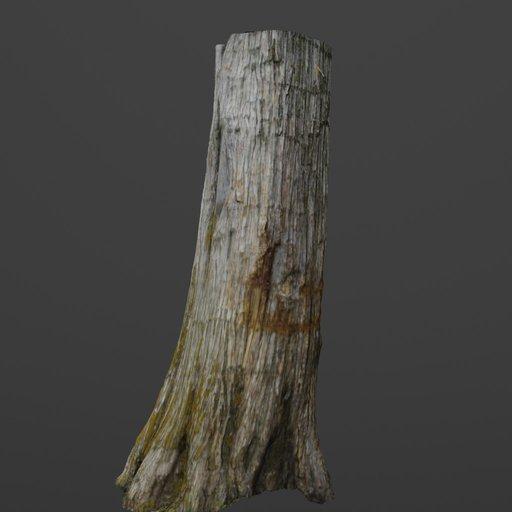 Thumbnail: Photoscanned Cedar Tree Trunk