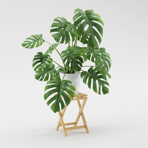 Thumbnail: Plant - Monstera