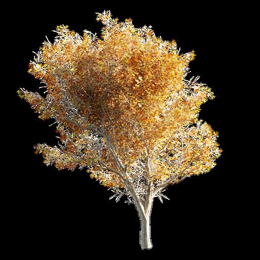 Thumbnail: Tree LOD 0 Autumn