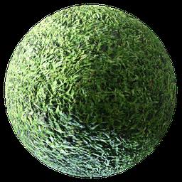 Thumbnail: Grass 02