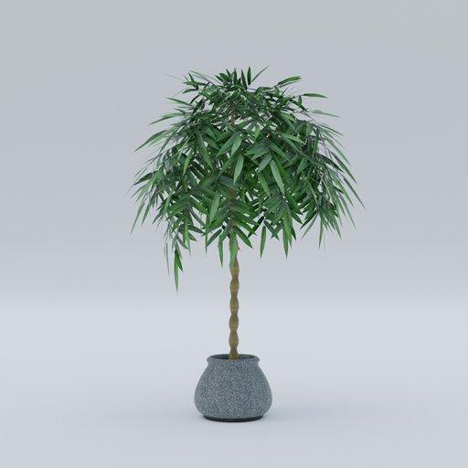 Thumbnail: Plant 14