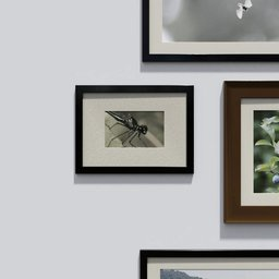Thumbnail: Photo frame 'anyframe' with dragonfly