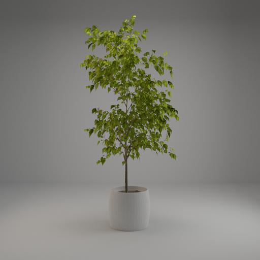 Thumbnail: Small Tree 002
