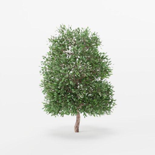 Thumbnail: Maple Tree 01