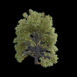 Thumbnail: Walnut Tree