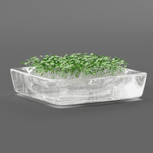 Thumbnail: Plant sprouts