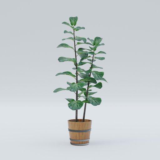 Thumbnail: Plant 12
